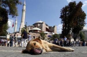 istanbul-19